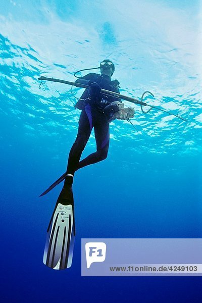 spearfisherman with good catches  off Tampa  Florida  USA  Gulf of Mexico  Caribbean Sea  Atlantic Ocean Not to be used for anti-spearfishing campaign
