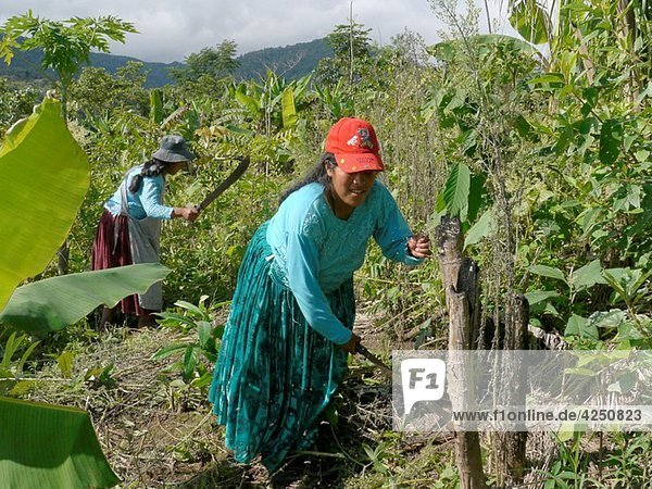 BOLIVIA ECOTOPS projects in Alto Beni Women cultivating land at Communidad Los Palmeros photograph by Sean Sprague
