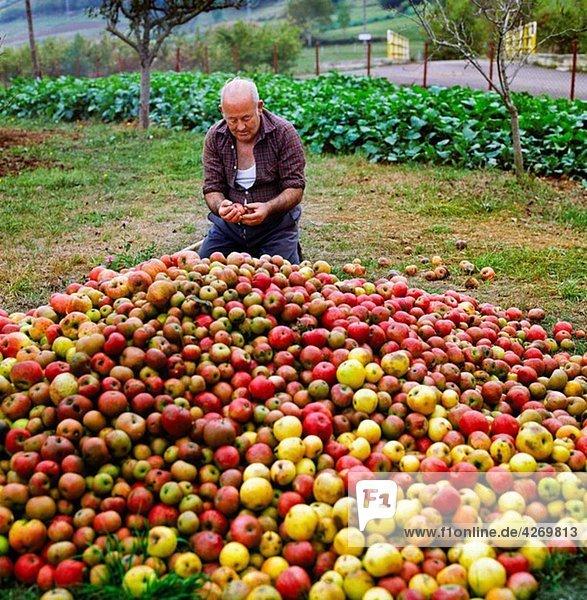 Apple cider. Picos de Europa. Asturias. Spain.