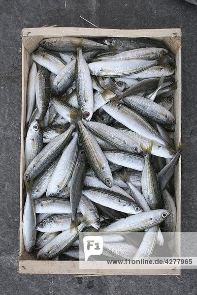 Fisch in einer box