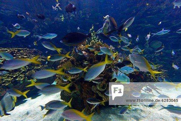 Coral Reef  L´Oceanographic  Valencia  Spain