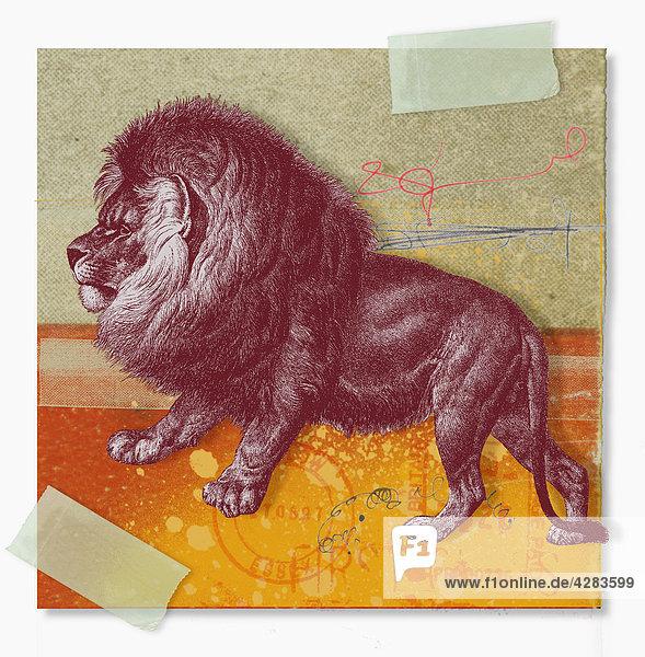 Collage zum Sternzeichen Löwe