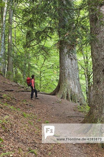 Frau im Wald  Lammertal  Tennengau  Österreich  Europa