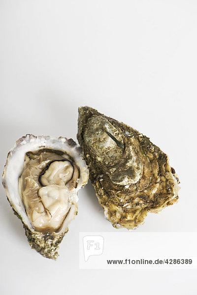 Frische rohe Austern