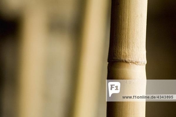 Bambus  Nahaufnahme Bambus, Nahaufnahme