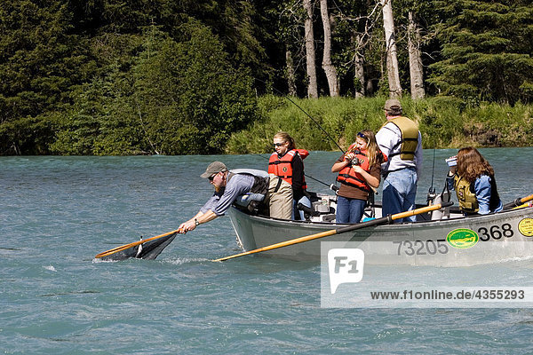 Netting-Fisch von Drift Boot Kenai River Kenai-Halbinsel in Alaska Sommer Guide