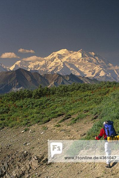 Man wandern auf Tundra w/Mt McKinley Denali NP im AK Sommer