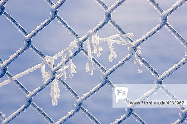 Close up of Frost-abgedeckt Gras gefangen in Maschendrahtzaun während des Winters  South Central Alaska