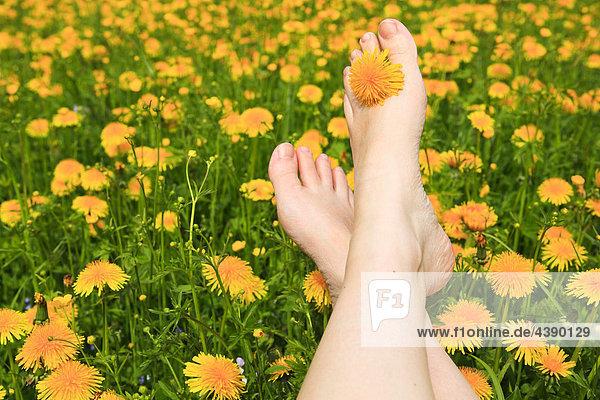 Bein  Blumen  Blumenfeld  Blumenwiese  Blüte  Duft  Entspannung  Erholung  Feld  Frau  Freiheit  Frühling  Füsse  Genuss  Haut