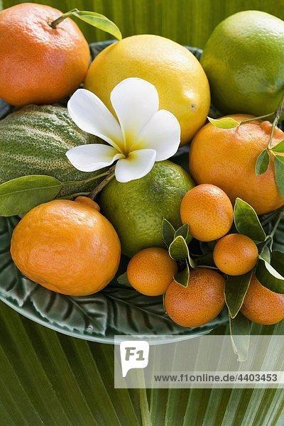 Frucht Sortiment Zitrusfrucht