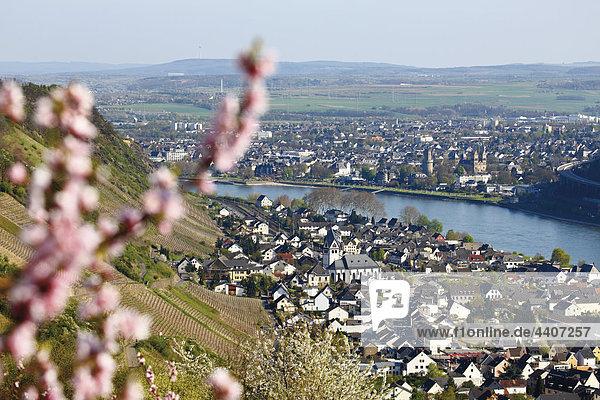Deutschland  Rheinland-Pfalz  Leutersdorf  Blick auf Rhein und Obstbäume