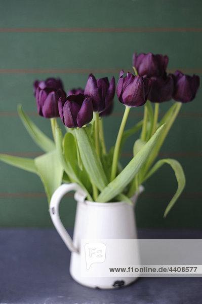Tulpen in Vase  Nahaufnahme