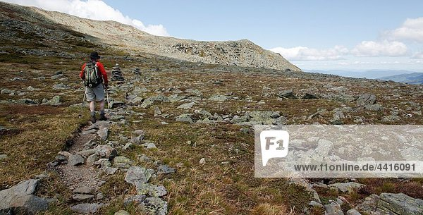 Mount Washington State Park - Hiker on the Alpine Garden Trail in the White Mountains  New Hampshire USA