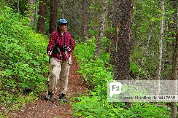 Overlander Falls Trail  Mt Robson Provincial Park  British Columbia  Canada