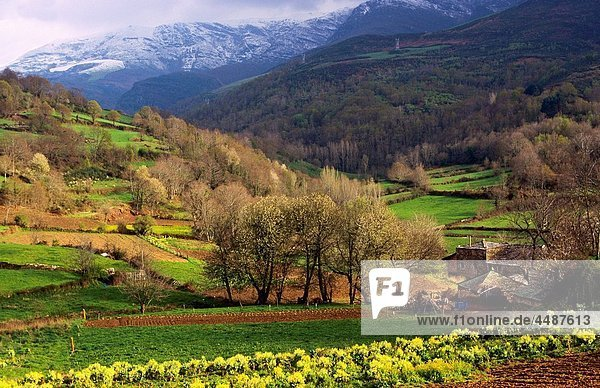 Poio Landscape of The Way of St James Lugo Galicia Spain