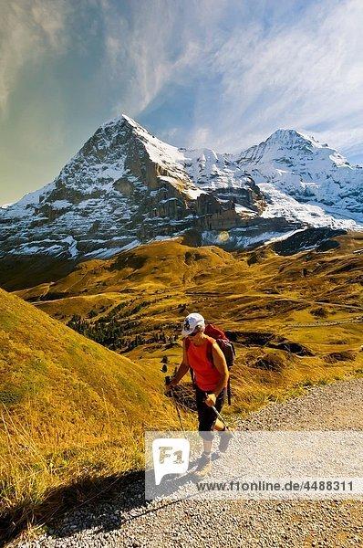 Hiking in the Swiss Alps from Mannlichen to Kleine Scheidegg  Canton Bern  Switzerland