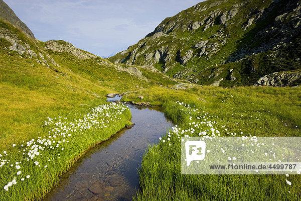 Nationalpark Planung Landschaft Bach Surselva Sumpf Hochebene Kanton Graubünden Wollgras Schweiz
