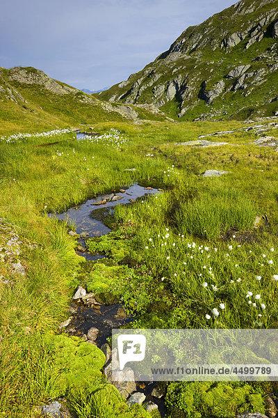 Nationalpark Planung Landschaft Bach Surselva Sumpf Hochebene Kanton Graubünden Wollgras Moos Schweiz