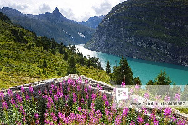 Berg, Blume, See, Surselva, Zervreilahorn, Zervreilasee, Kanton Graubünden, Stausee, Schweiz