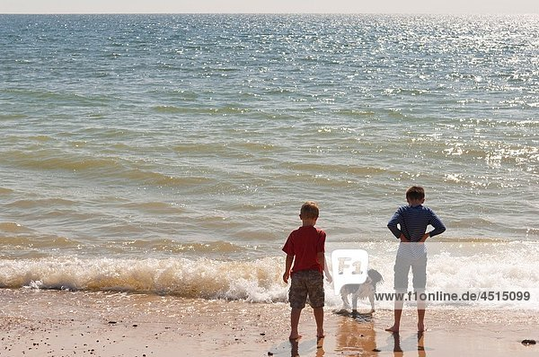Two boys and their dog on a UK beach paddling in the sea in the summer