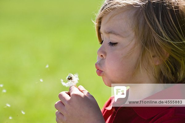 Boy blowing Dandelion in hellem Sonnenlicht
