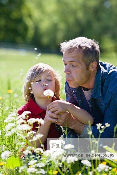 Vater und Sohn blowing Dandelion in hellem Sonnenlicht