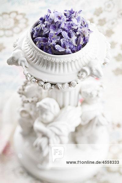 Veilchen  kristallisiert / Mit Englischsprachigem Rezept