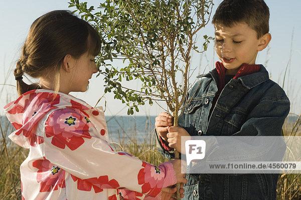 Kinder halten jungen Baum zusammen