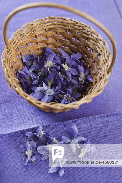 Violette Blumen im Korb
