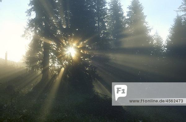 Sonne scheint durch Bäume in der Nähe von Dzembronya in der ukraine