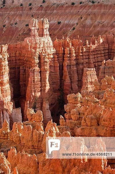 Bryce Canyon National Park  Sunset Point  Amphitheater  Rock formations and hoodoos at sunset  Utah  USA