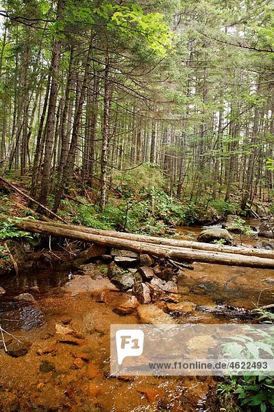 Log bridge along the Nancy Pond Trail in the Pemigewasset Wilderness of the New Hampshire White Mountains.
