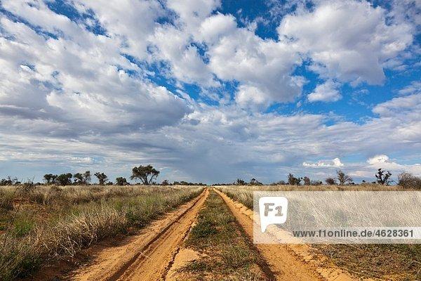 Afrika  Botswana  Mabuasehube  Offroadstrecke in der Kalahari