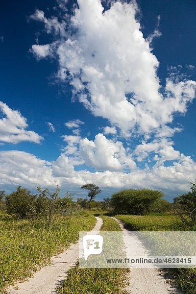 Africa  Botswana  View of central kalahari game reserve with track