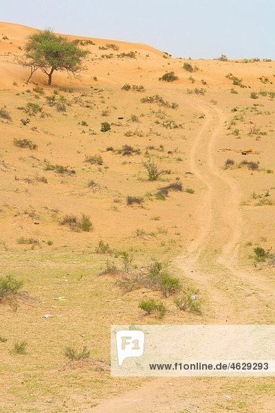 Vereinigte Arabische Emirate  Wüste bei Dubai