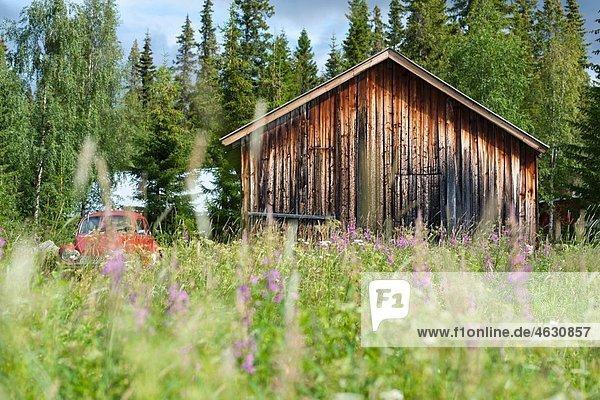 Schweden  Lappland  Blick auf alte Scheune in einer Blumenwiese in Kvikkjokk