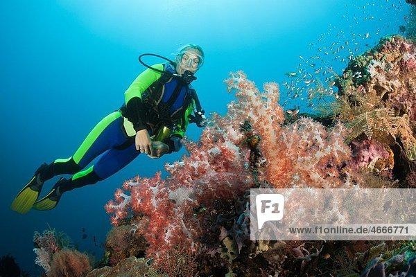 Scuba Diving at Bali  Alam Batu  Bali  Indonesia