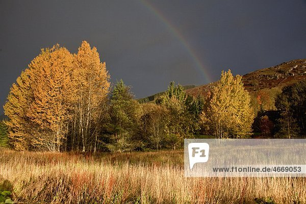 Regenbogen über herbstlichen Bäumen  Beaminster  Dorset  Großbritannien