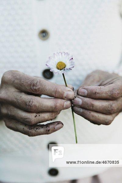 Zwei Hände halten eine Blume