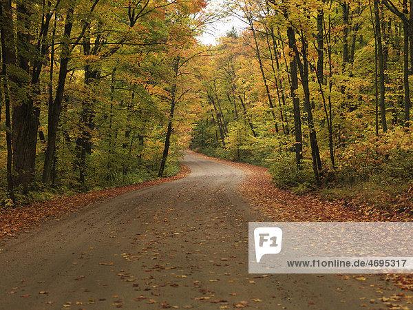 Kurvige Schotterstraße durch herbstliche Landschaft  Algonquin Provincial Park  Ontario  Kanada