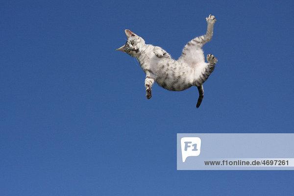 Fliegende Katze