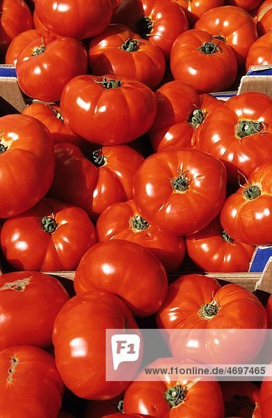 Abundance of bright red tomatoes  Provence  France