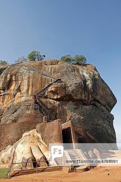 Lions paws   5th century lions head   Sakya simha lion of the sakya clan   Sri Lanka