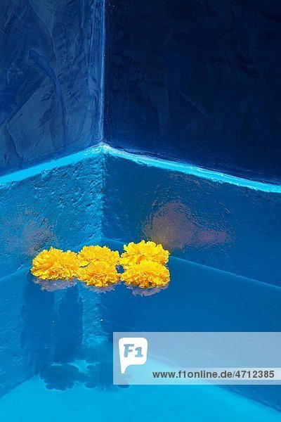 Fine art yellow marigold flowers floating on clean blue transparent water