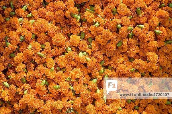 Flower decoration for Durga Pooja dassera Vijayadasami Festival   Calcutta Kolkata   West Bengal   India