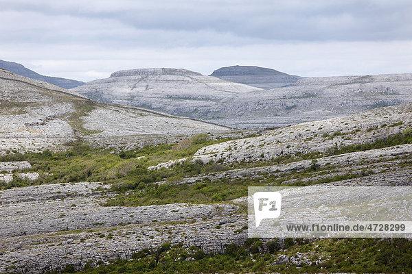 Burren Nationalpark  County Clare  Republik Irland  Europa