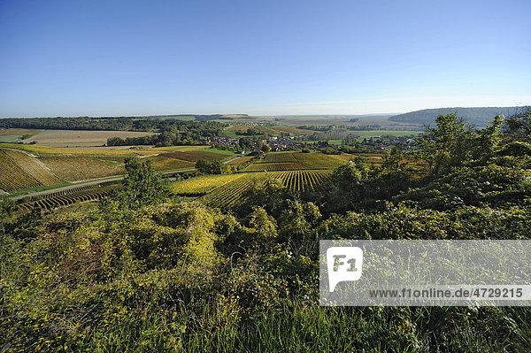 Weinanbau in der Nähe von Bar-sur-Aube  Champagne  Frankreich  Europa