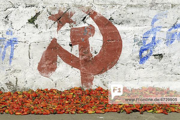 Chilis und Wahlwerbung für die Kommunistische Partei  Munnar  Kerala  Südindien  Indien  Asien