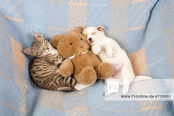 Kätzchen und Welpe schlafen nebeneinander  neben Teddybär