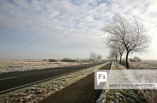 Winterlandschaft mit Landstraße  Kreis Dithmarschen  Schleswig-Holstein  Deutschland  Europa